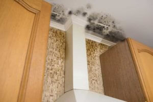 mold removal las vegas nevada